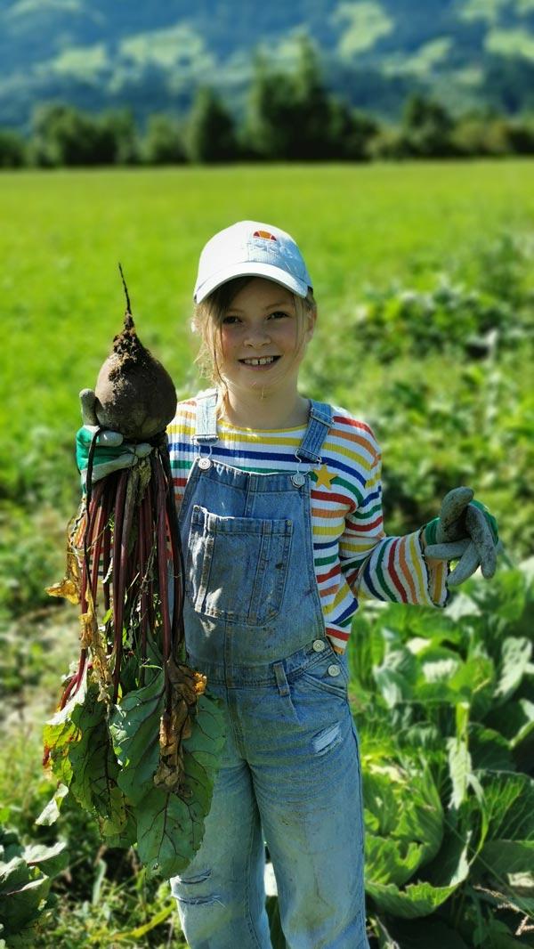 Gemüse Ernte